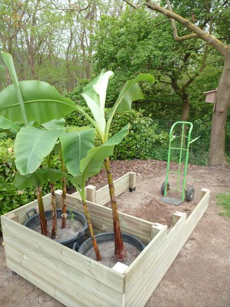 cache pot pour plante m diterran enne laurent leroy. Black Bedroom Furniture Sets. Home Design Ideas