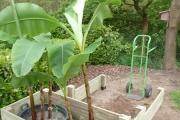 Les plantes et le cache-pot