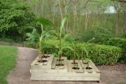 Cache-pot et plantes