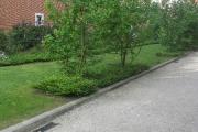 Taille d'arbres et arbustes