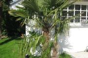 Aperçu des palmiers