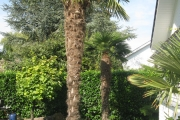 Plantation de palmier