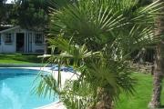 Palmier et piscine