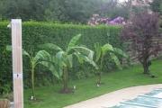 Palmier et plantation