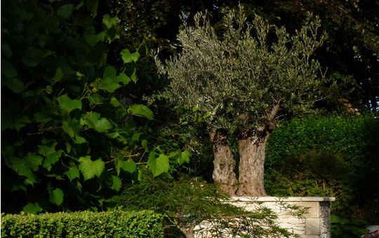 Architecte paysagiste et entrepreneur de jardin en brabant for Entrepreneur jardin