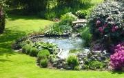 bassin-de-jardin