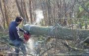 Mission en élagage et abattage d'arbres