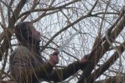 Nos outils d'élagage sont adaptés pour la taille de tout type d'arbres
