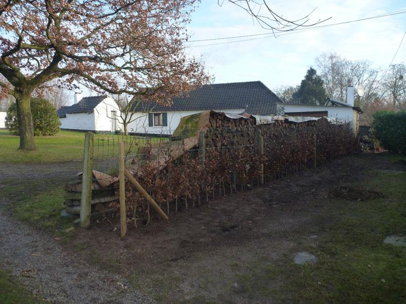 Mise en place d 39 une haie de h tre laurent leroy for Entrepreneur jardin