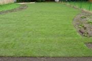 Création de pelouse