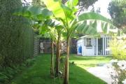 Alignement de palmiers