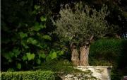 Création de jardin zen